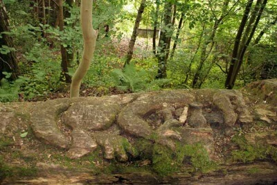 Weem Wood Walk, Sleeping Dragon
